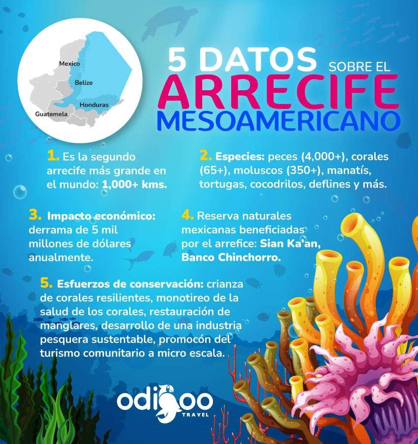 Infografía de la Barrera de Arrecife Mesoamericana