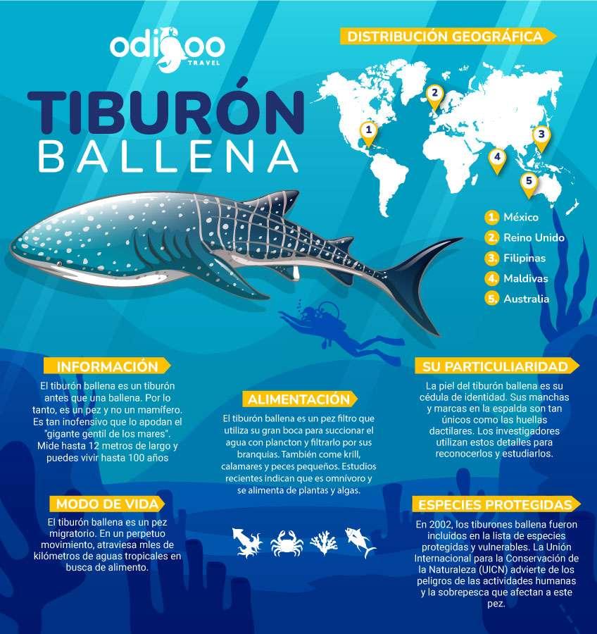 Infografía de tiburón ballena