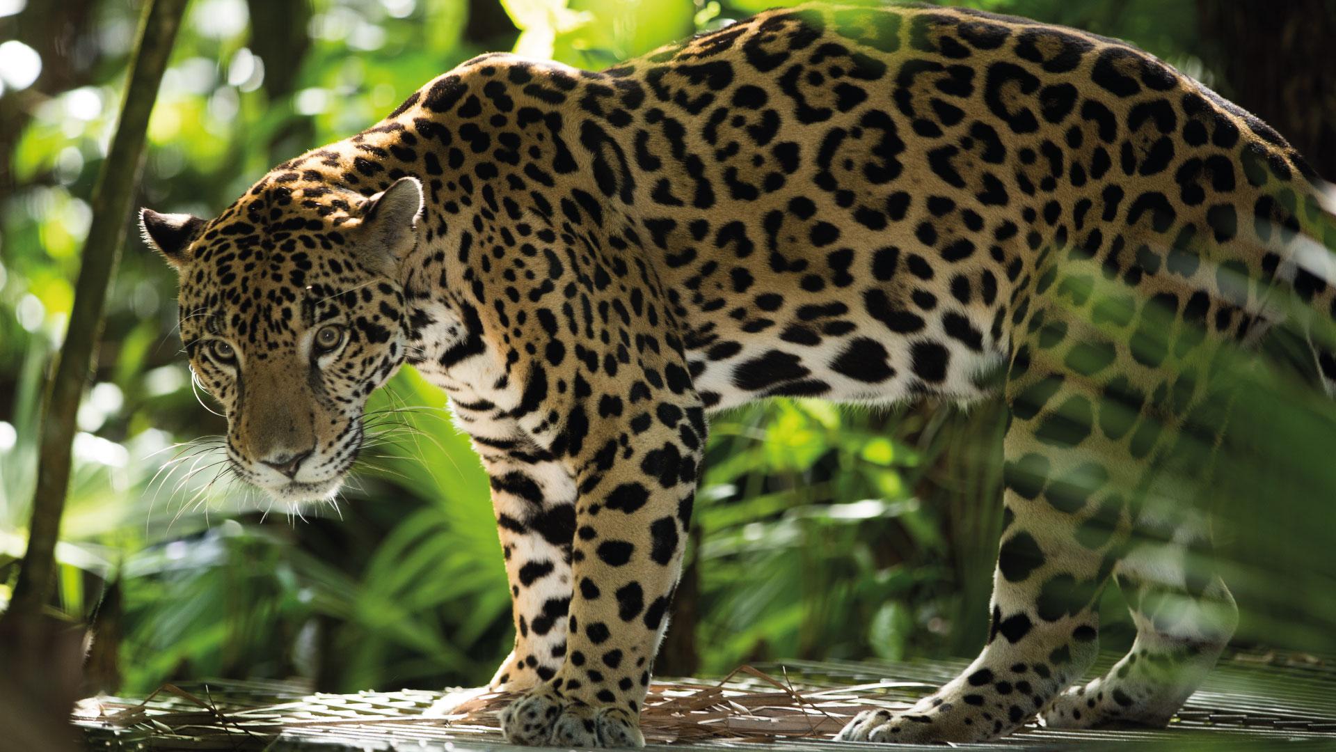 Biodiversidad en Cancún